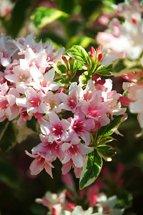 flowers, speak of mathematics too
