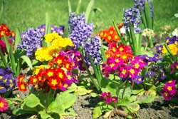 a game of colours and flowers